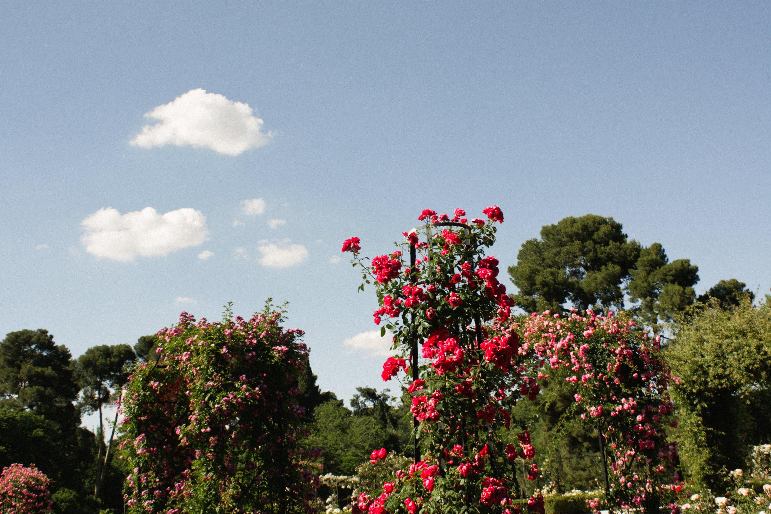 rose garden in madrid spain