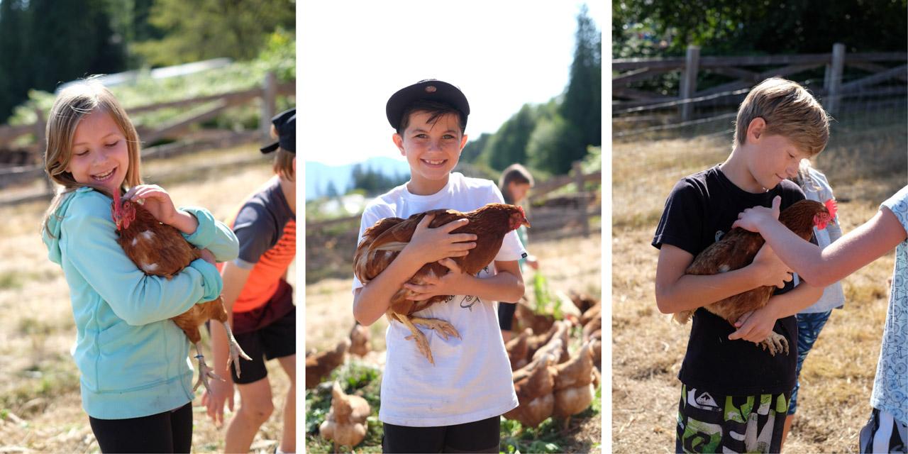 chickens-5.jpg