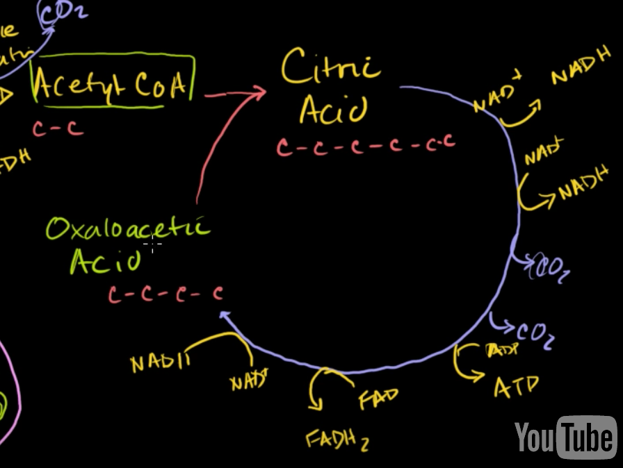 This is a screenshot from Khan Academy's video about the Krebs cycle. It's very good, you should look it up