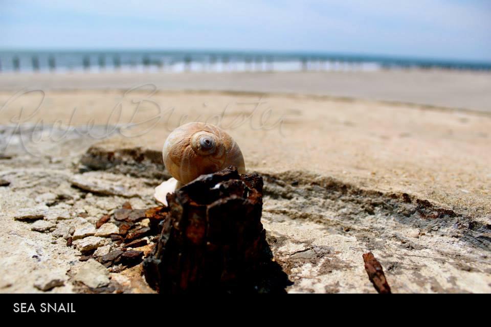 Sea Snail.jpg