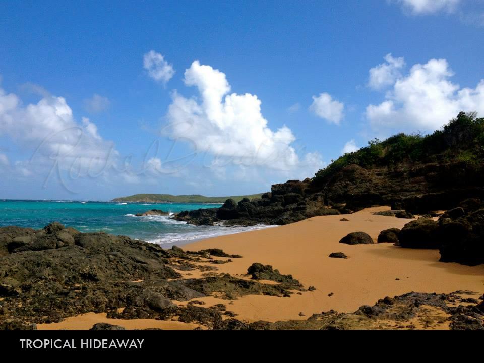 Tropical Hideaway.jpg