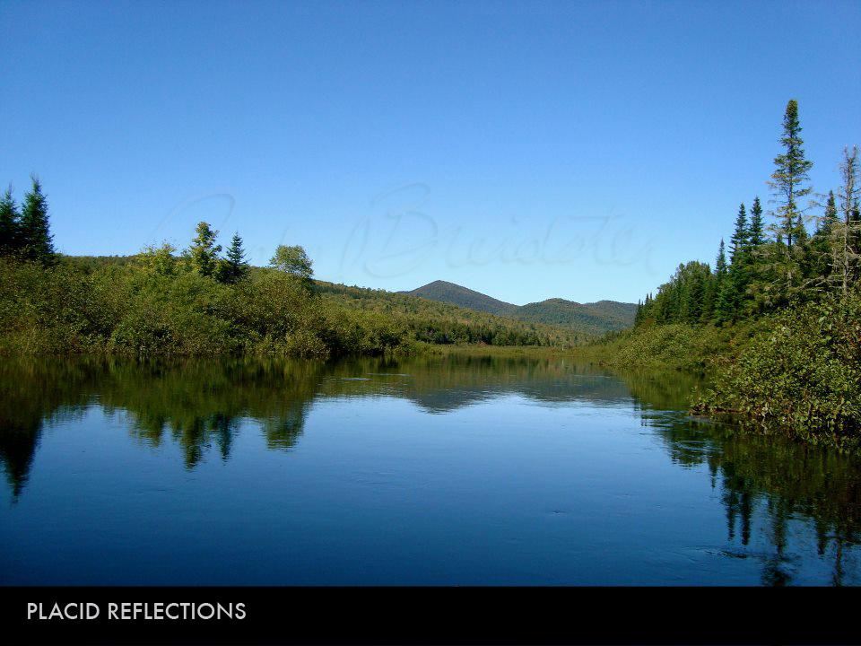 Placid Reflections.jpg
