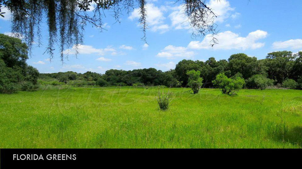 Florida Greens.jpg