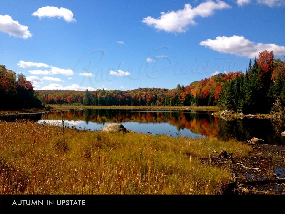 Autumn in Upstate.jpg