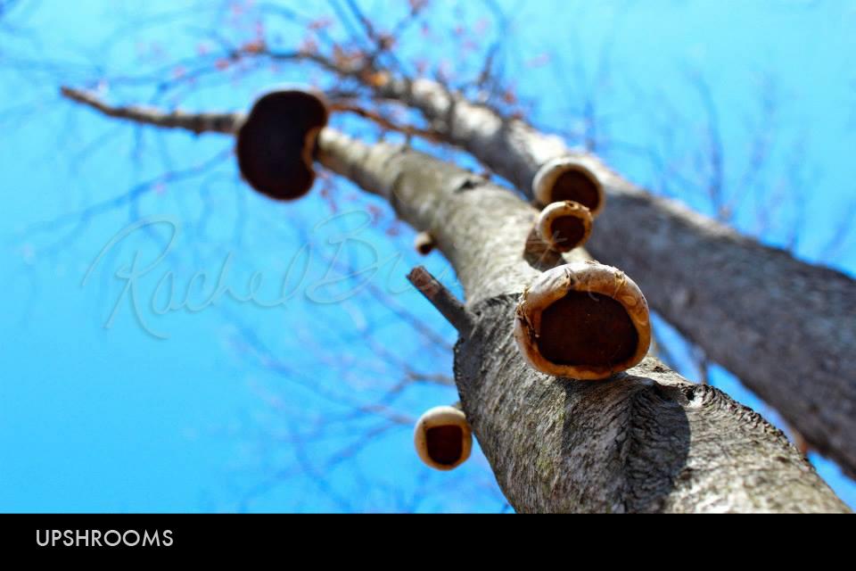 Upshrooms.jpg