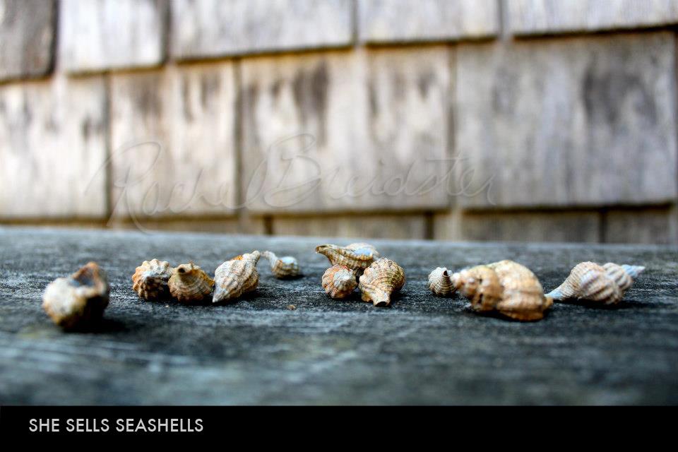 She Sells Seashells.jpg