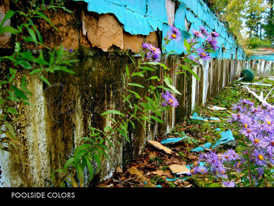 Poolside Colors.jpg