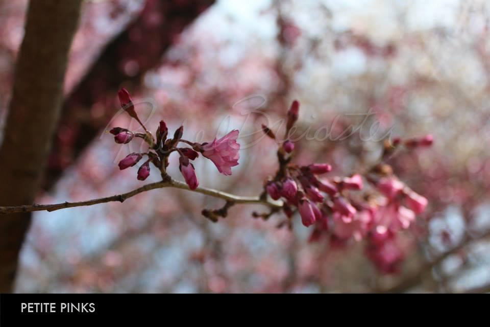 Petite Pinks.jpg