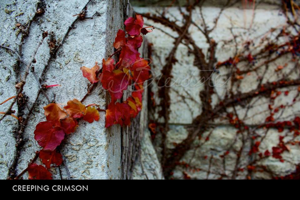 Creeping Crimson.jpg