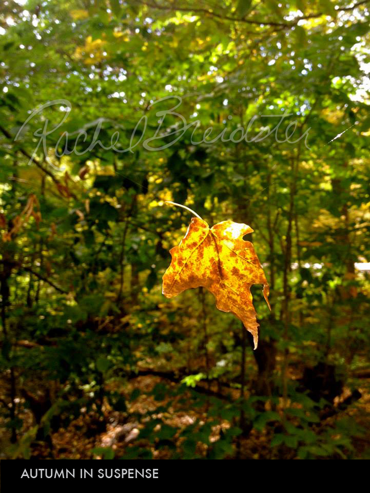 Autumn in Suspense.jpg