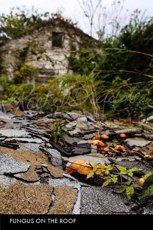 Fungus-on-the-Roof2.jpg
