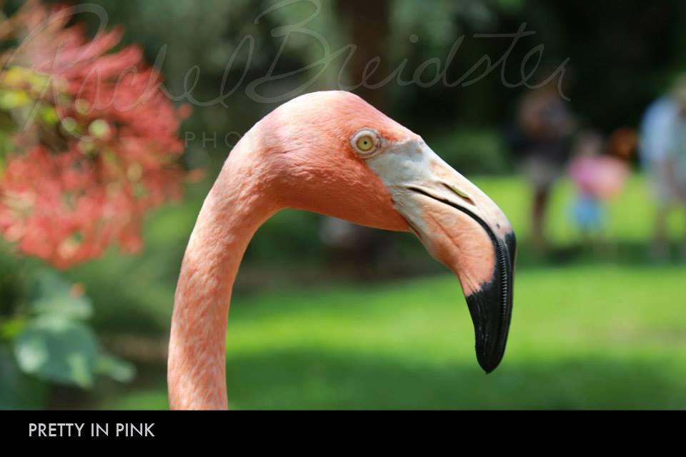 pretty-in-pink2.jpg