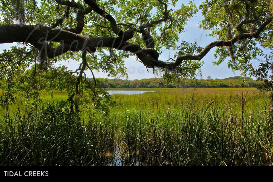 tidal-creeks2.jpg