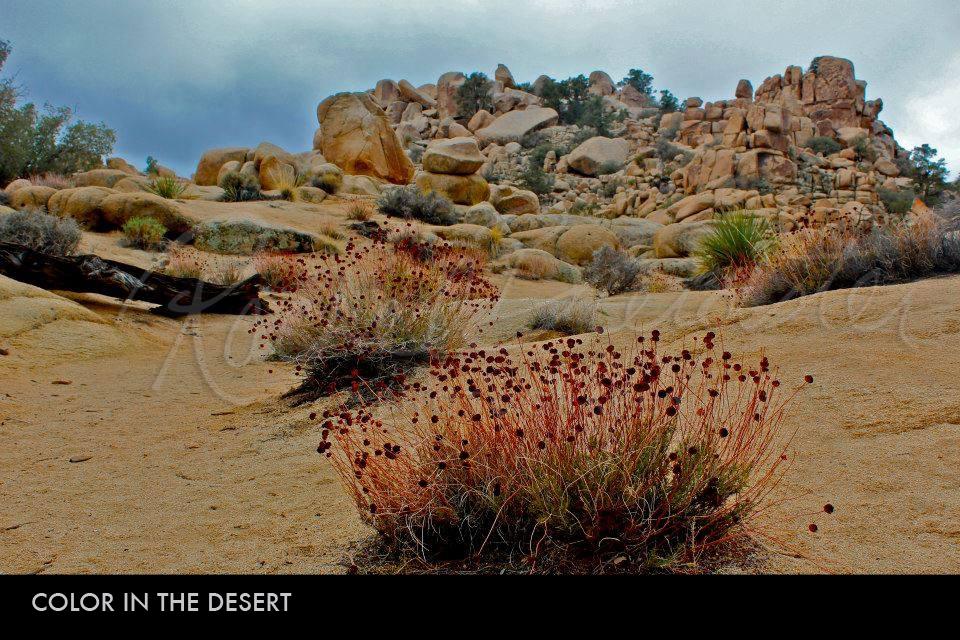 color-in-the-desert2.jpg