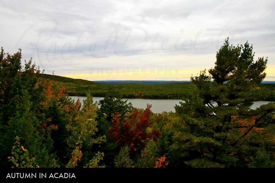 autumn-in-acadia2.jpg