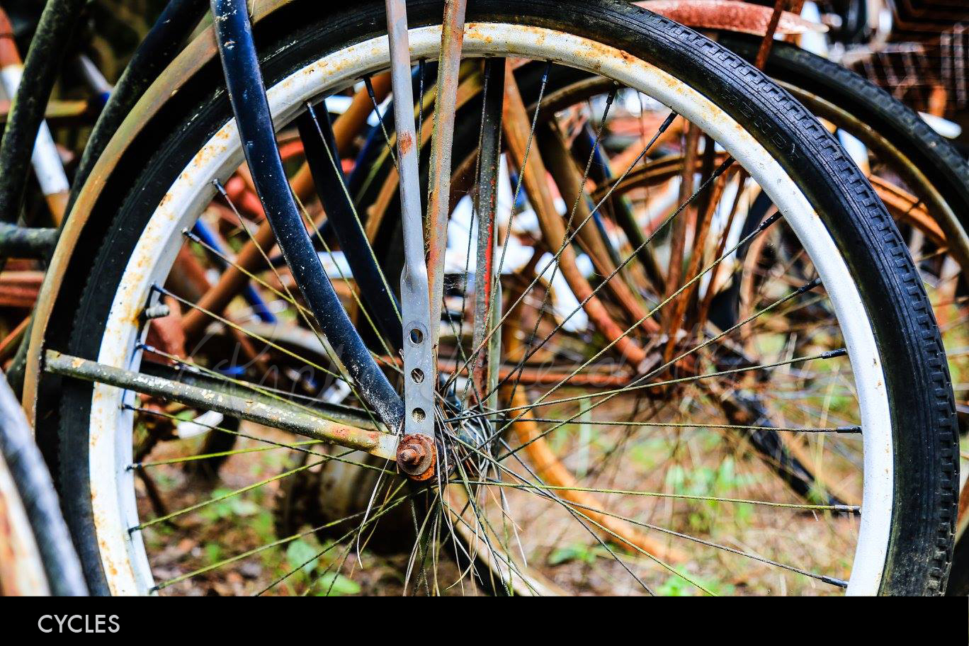 Cycles2.jpg