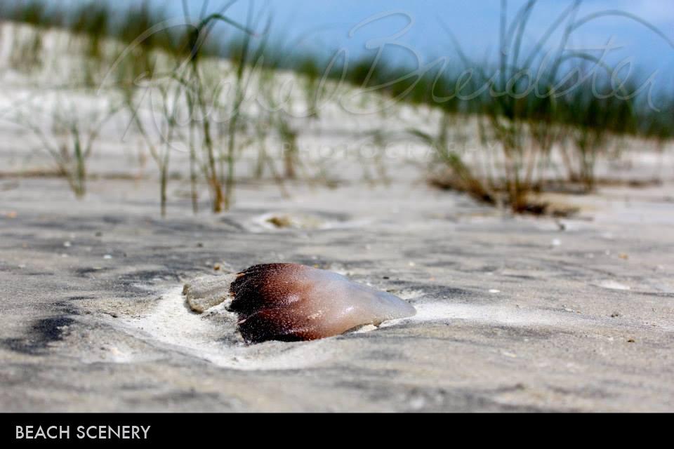 beach-scenery2.jpg