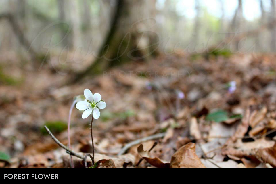 Forest-Flower2.jpg