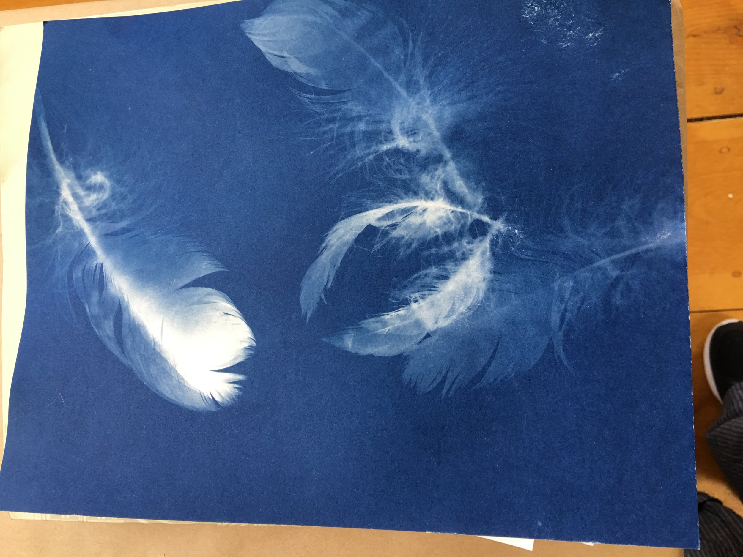 Feathers after exposure in the sun and developed in water.