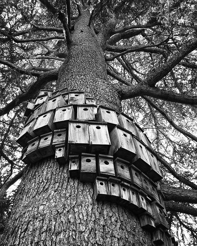 Home sweet home 🏡  #iphone6s #birdhouse #homesweethome #treehouse