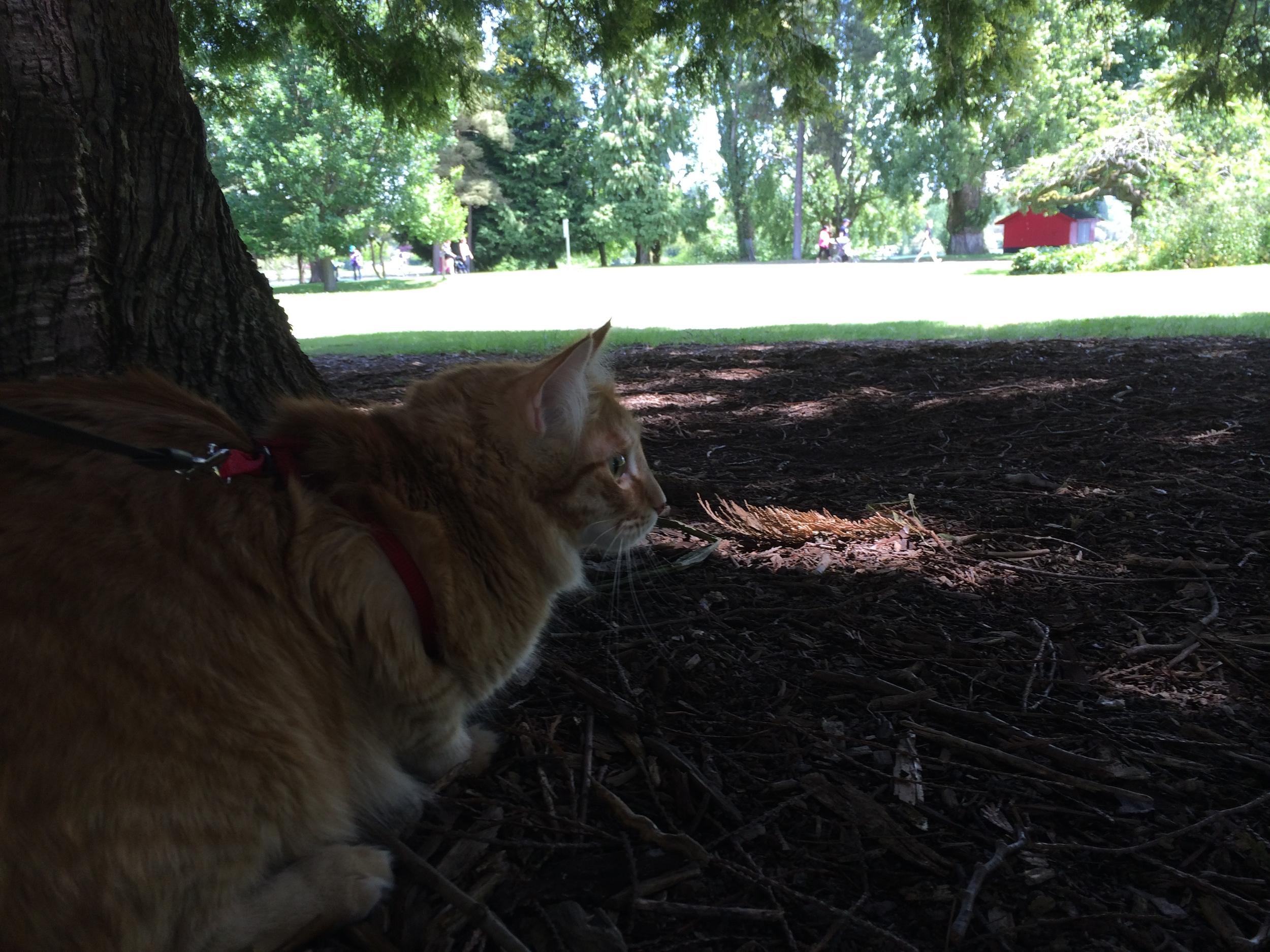 Oz-under-tree