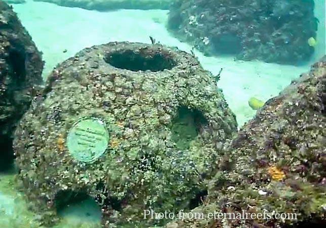 Eternal-Reefs-7-Front-Page.jpg