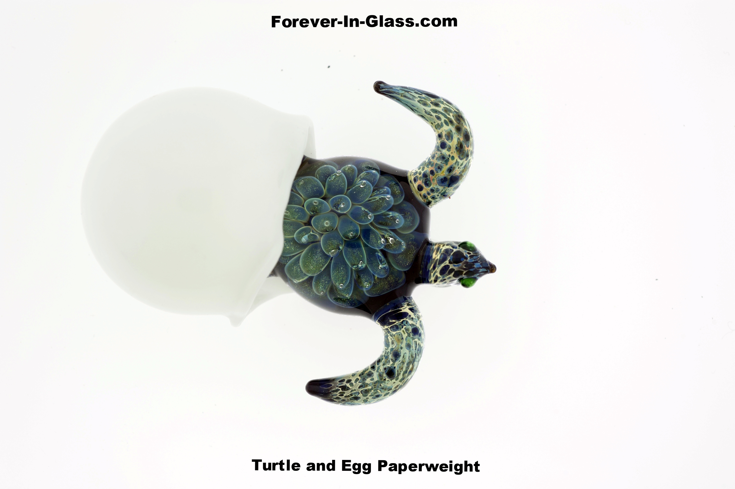 Turtle and Egg.jpg