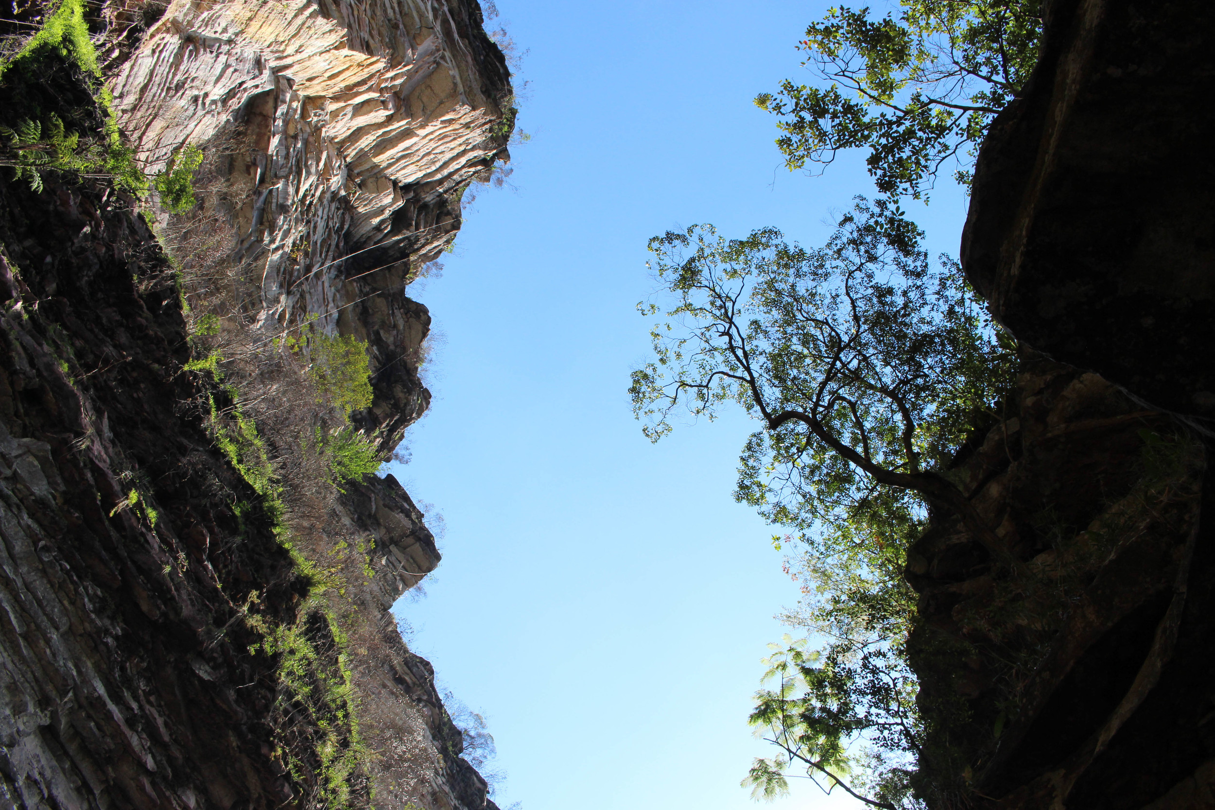 An upward view from the canyon.