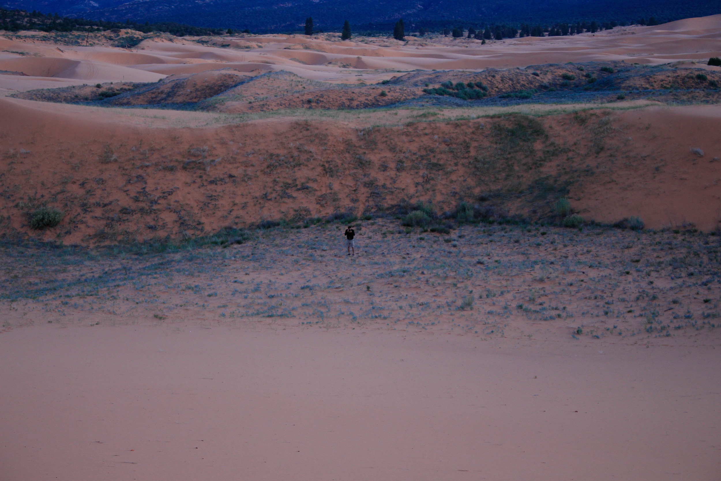 Pink Sand Dunes State Park, Utah. I love the blues here.