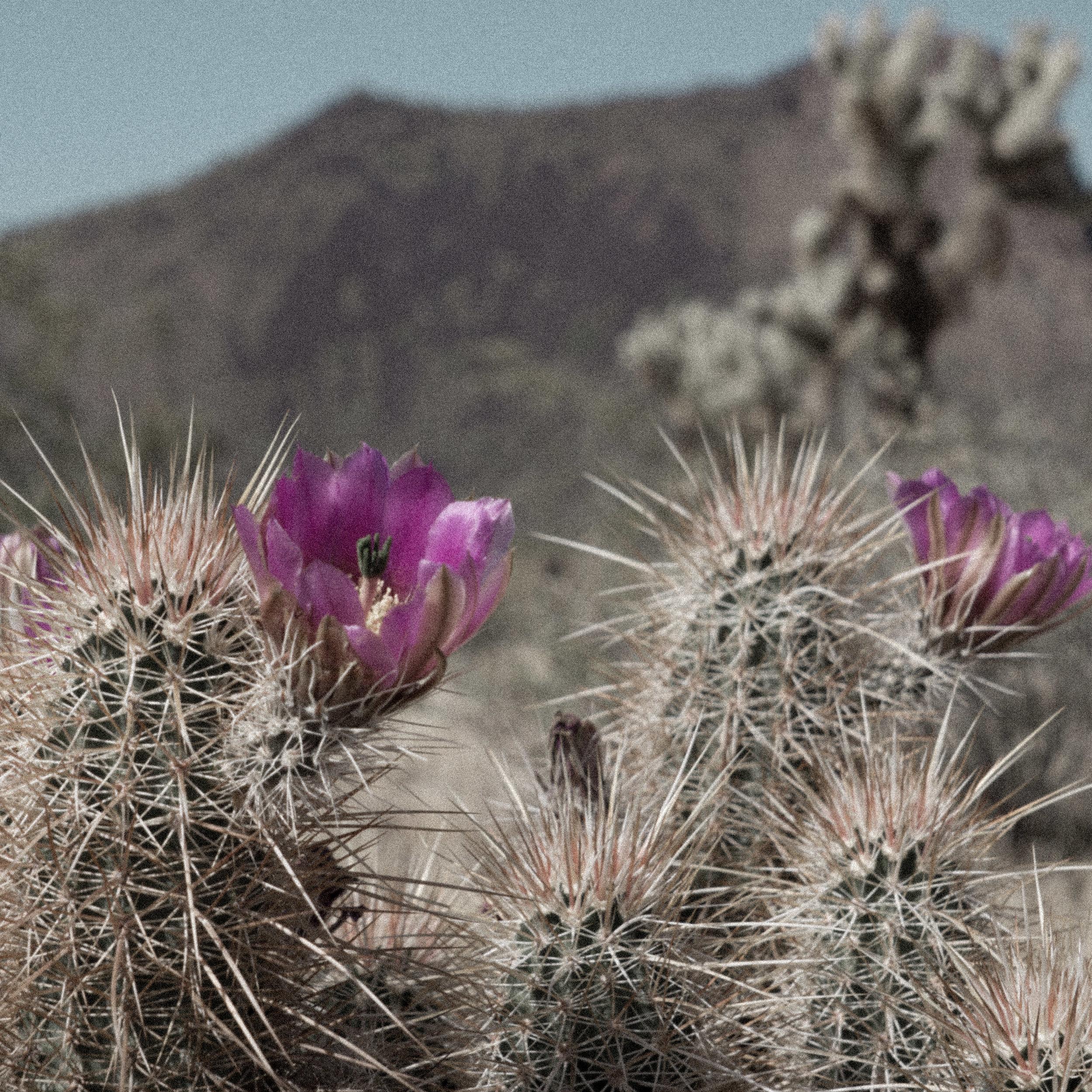 march desert_-3.jpg