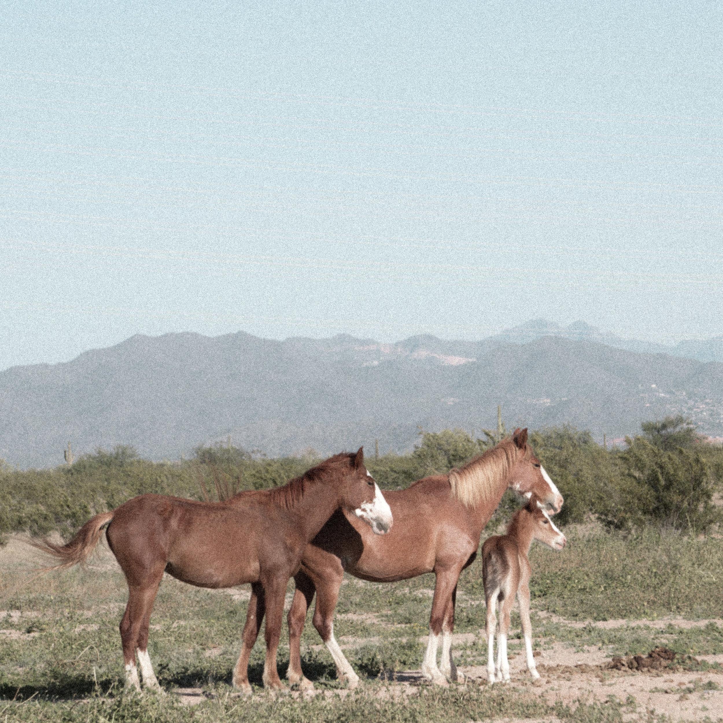 march desert_-16.jpg