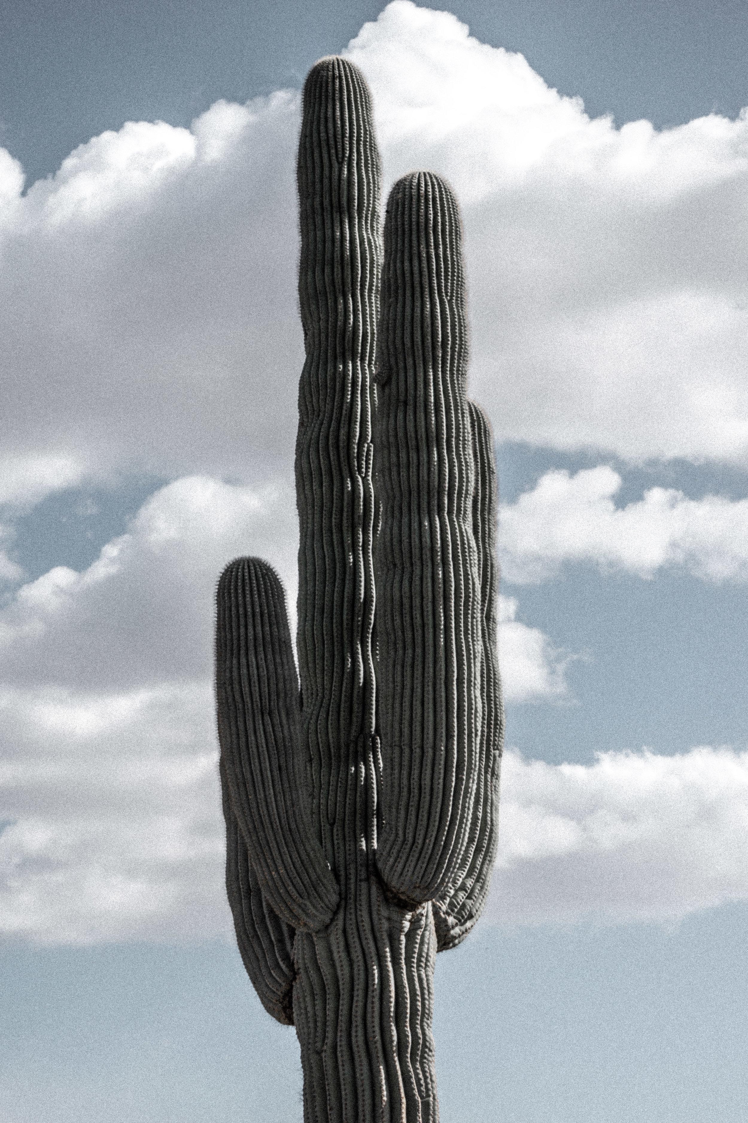 march desert_-19.jpg