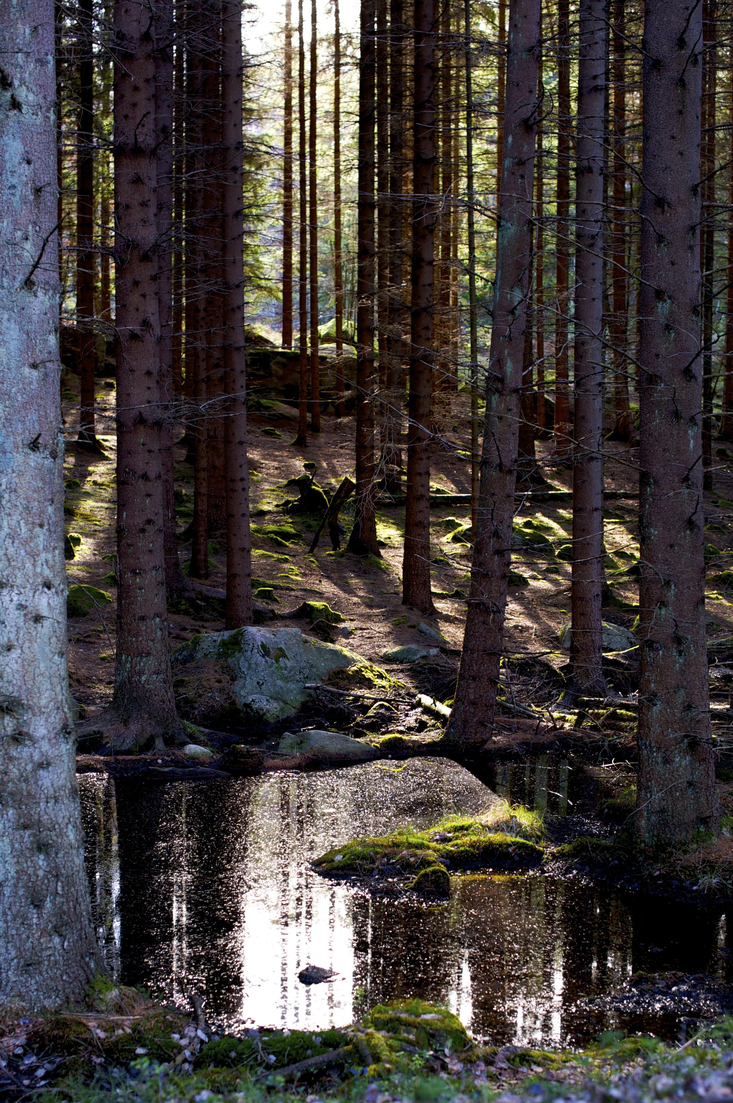 Granskog bäck.jpg