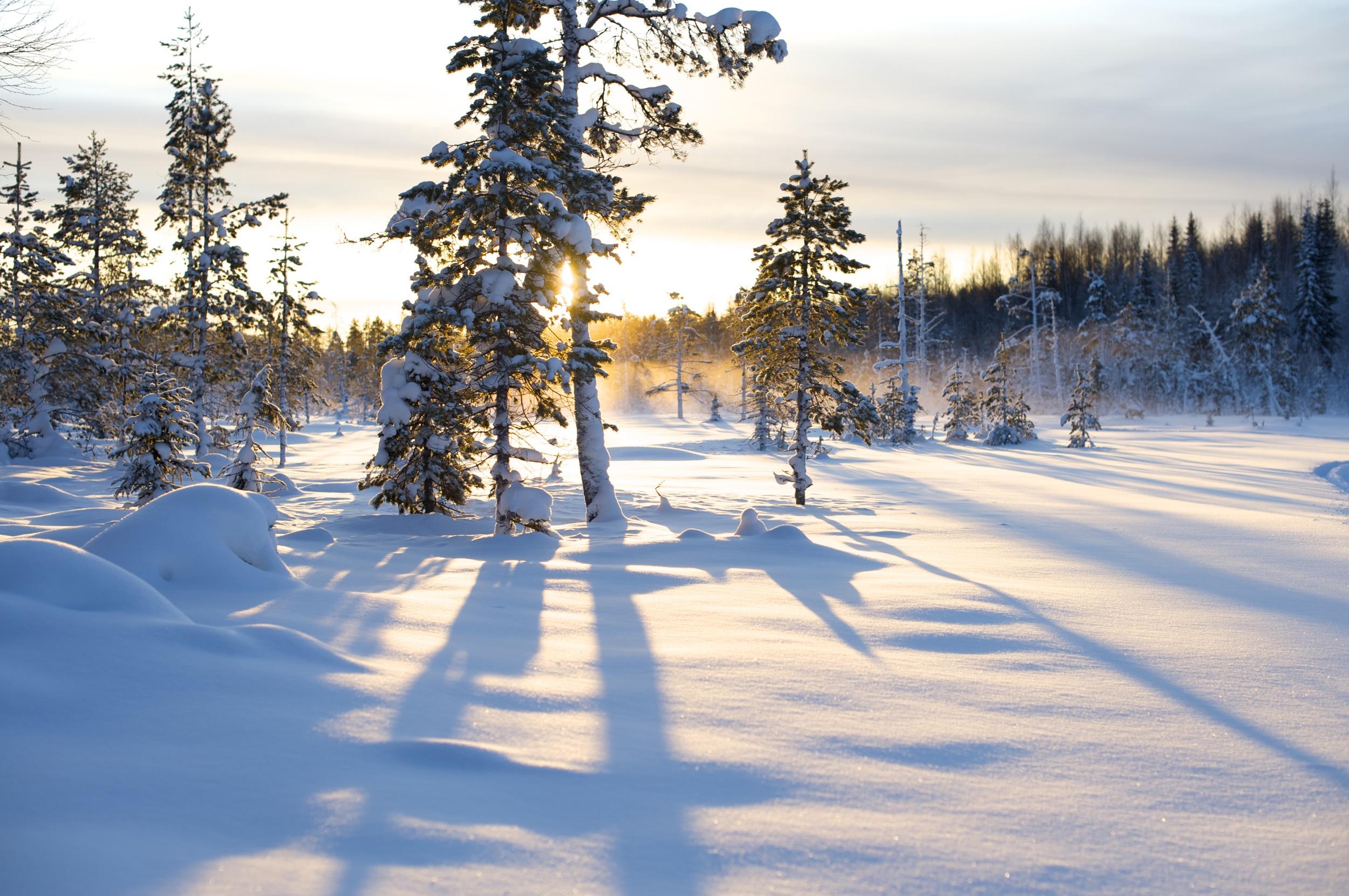 Tall snö motljus.jpg
