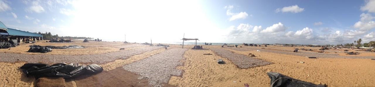 negombo beach fish market