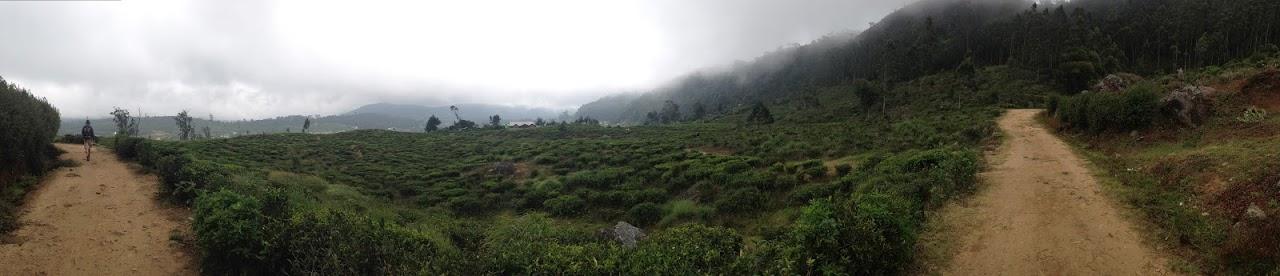 nuwara eliya tea pedro estate