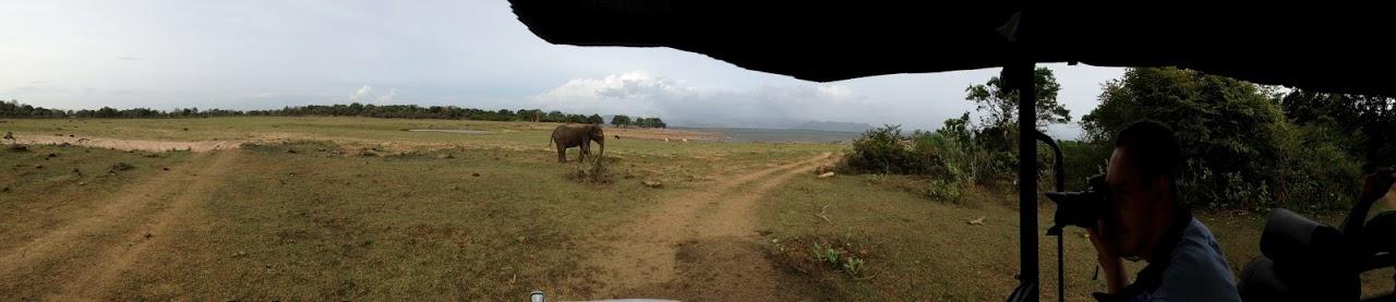udawalawe park safari elephant jeep
