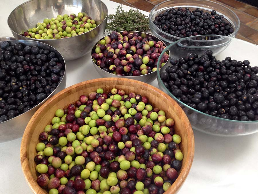 Olives about to be cured