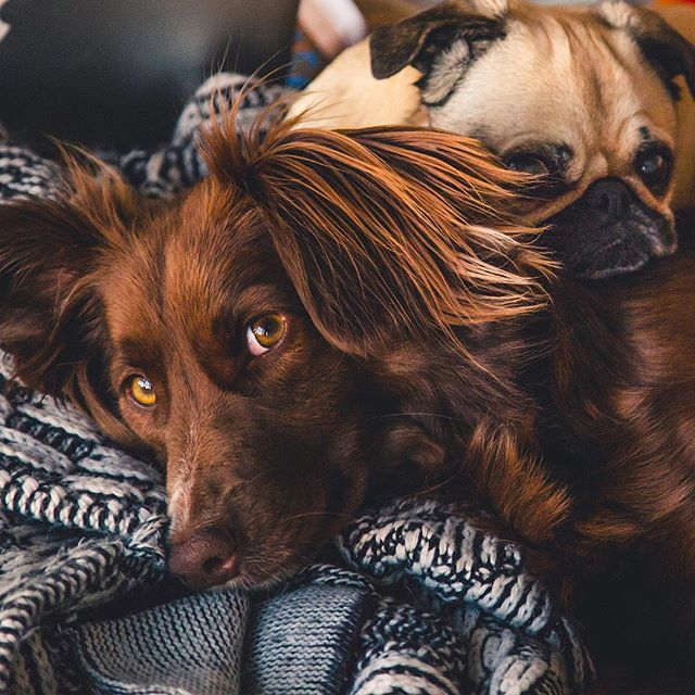 Pleasant feelings. #calmcanine . . . . #peaceful #essentialoils #nature #apethecary #eo #dogsofinstagram #dog #pamperyourdog #love #ilovemydog