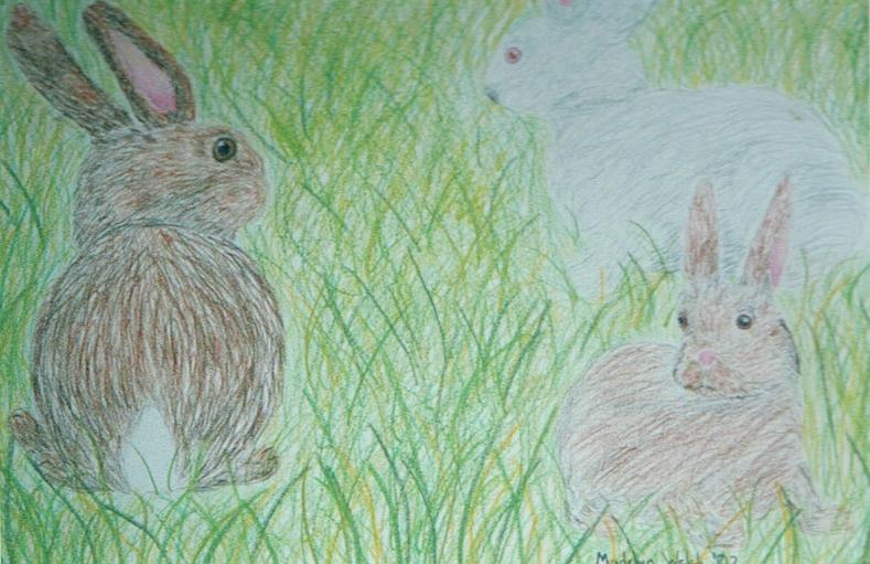 madelyn bunnies.jpg