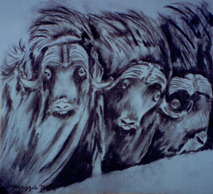maggie's bison.jpg