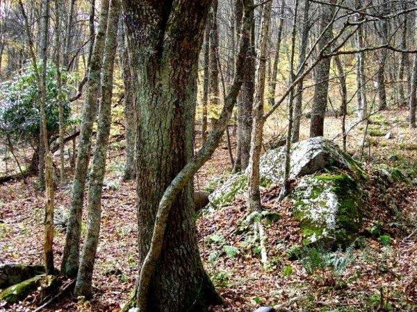 171235 Rock formation  among trees.jpg