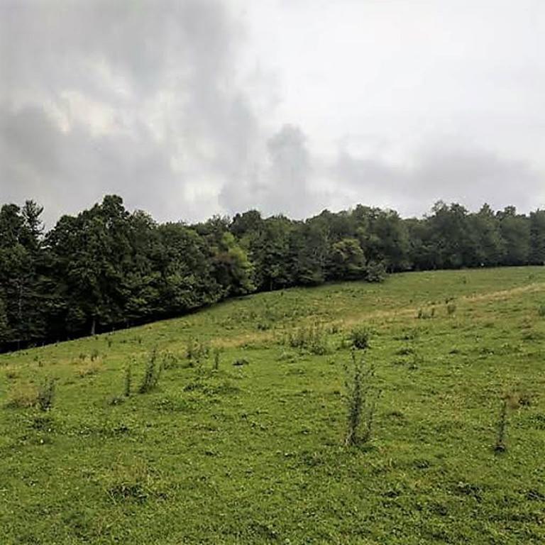 Moore-2.96-acres-2.jpg