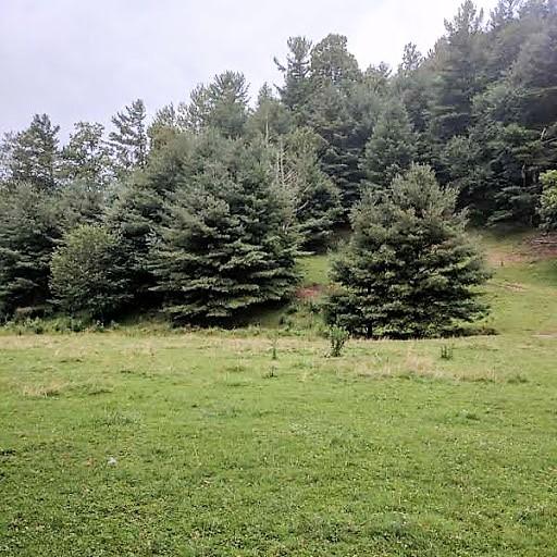 Moore 1.09 acres (1).jpg