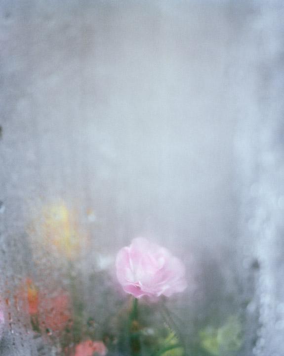 08_Andrew_Miksys_PLASTIC_FLOWERS.jpg