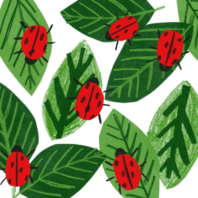Ladybirds - taaryn brench.jpg