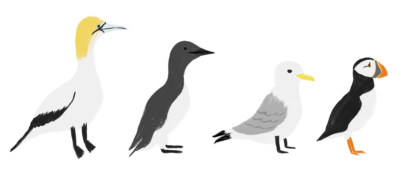 Coastal birds - Taaryn Brench.png