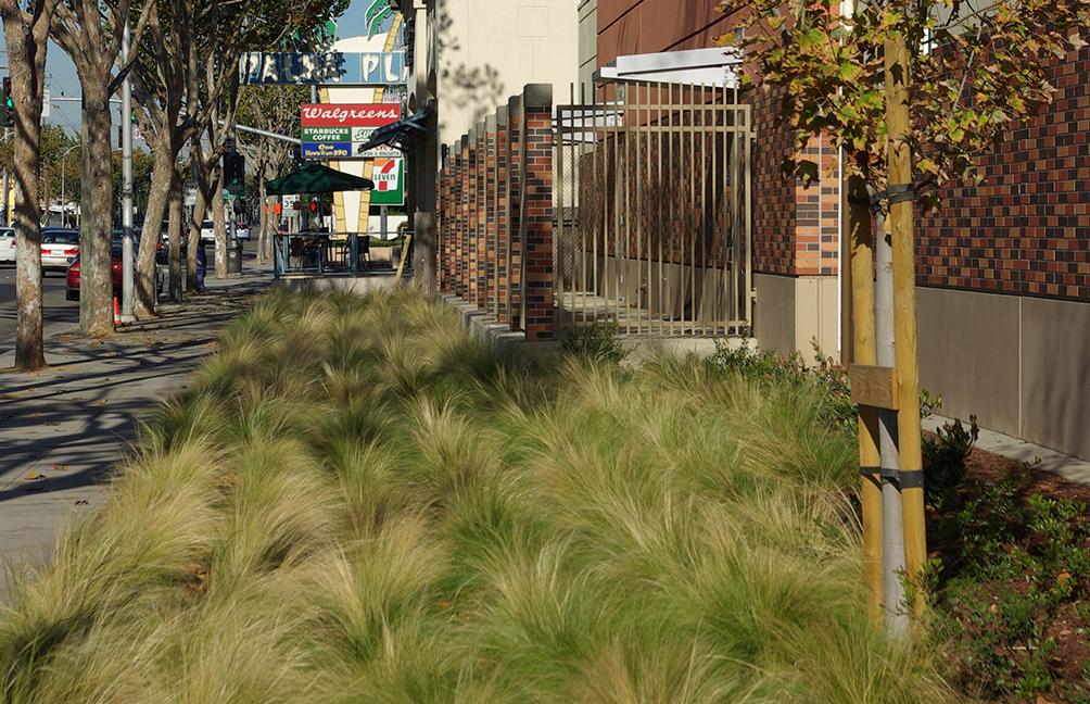 GrassesOutside-resized-landscape.jpg