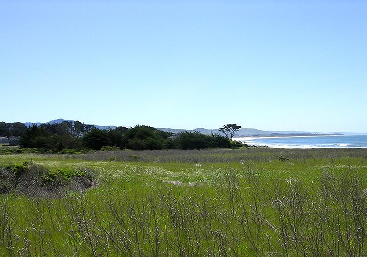 Mirada surf view-crop-sm-DSCN1331-sm.jpg