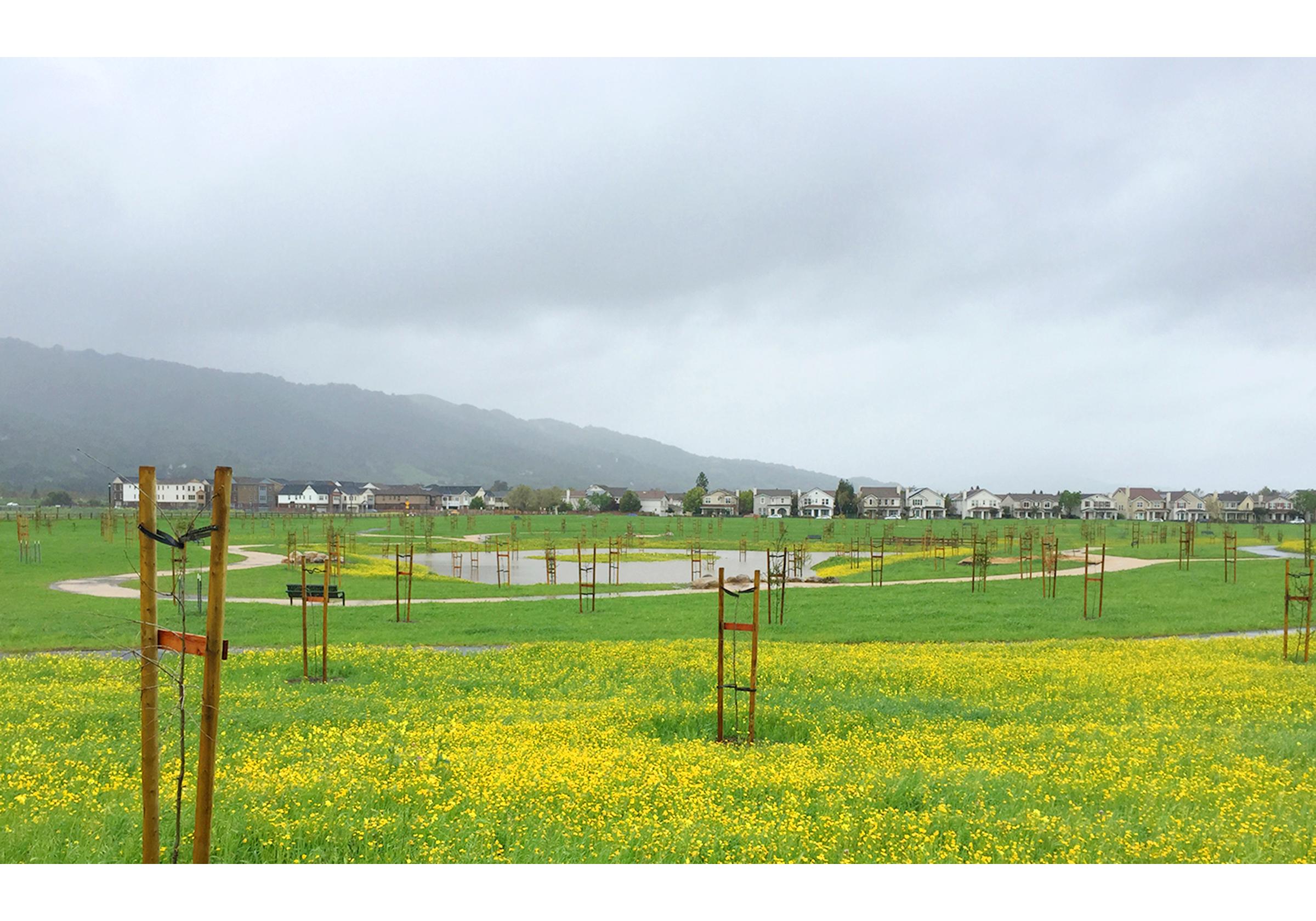 Bernal pond-Mar2016-crop-sm-sm.jpg